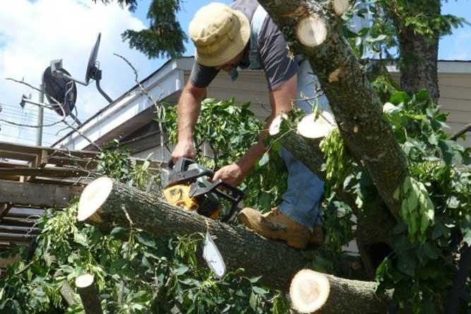 Como resolver questões de árvores do terreno vizinho?