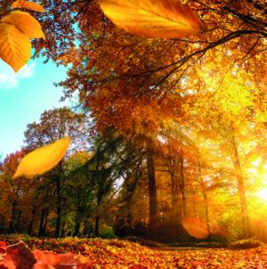 Outono pode ser a melhor estação para se comprar uma casa