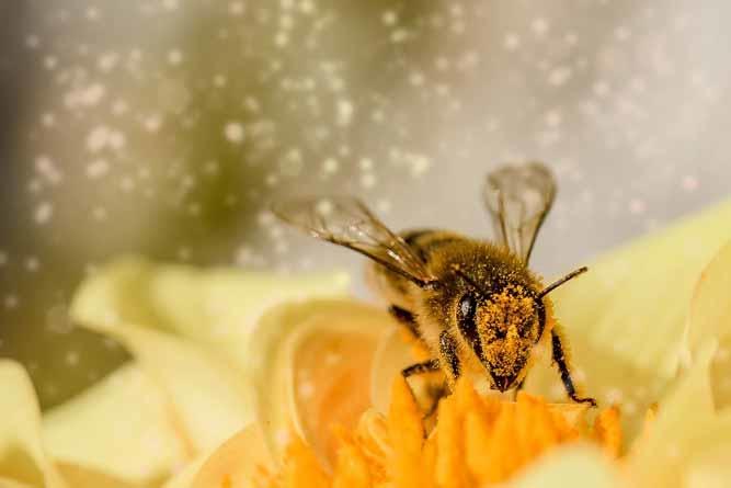 Alergia aos polens