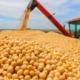 Guerra comercial entre EUA e China favorece Brasil na exportação de soja