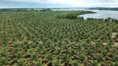 FIT Food Enterprise traz água de coco natural, do Brasil